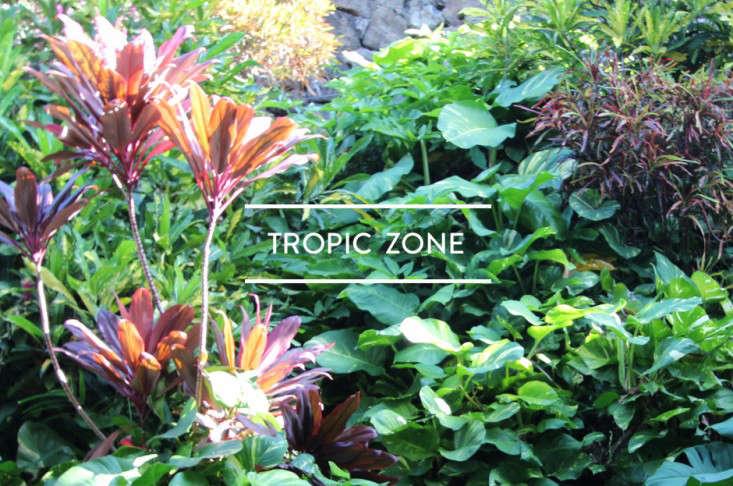 toc-tropic-zone-gardenista