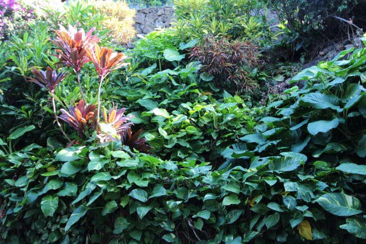 tropical-flowers-driveway-doris-duke-shangri-la-honolulu-gardenista