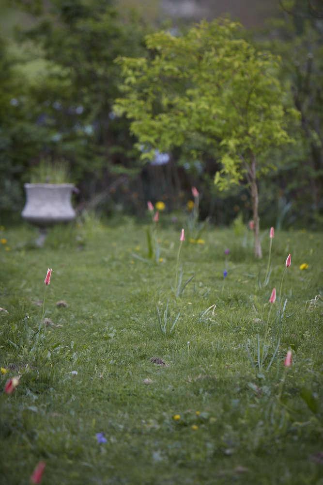 tulips-in-lawn-4-britt-willoughby-dyer-gardenista