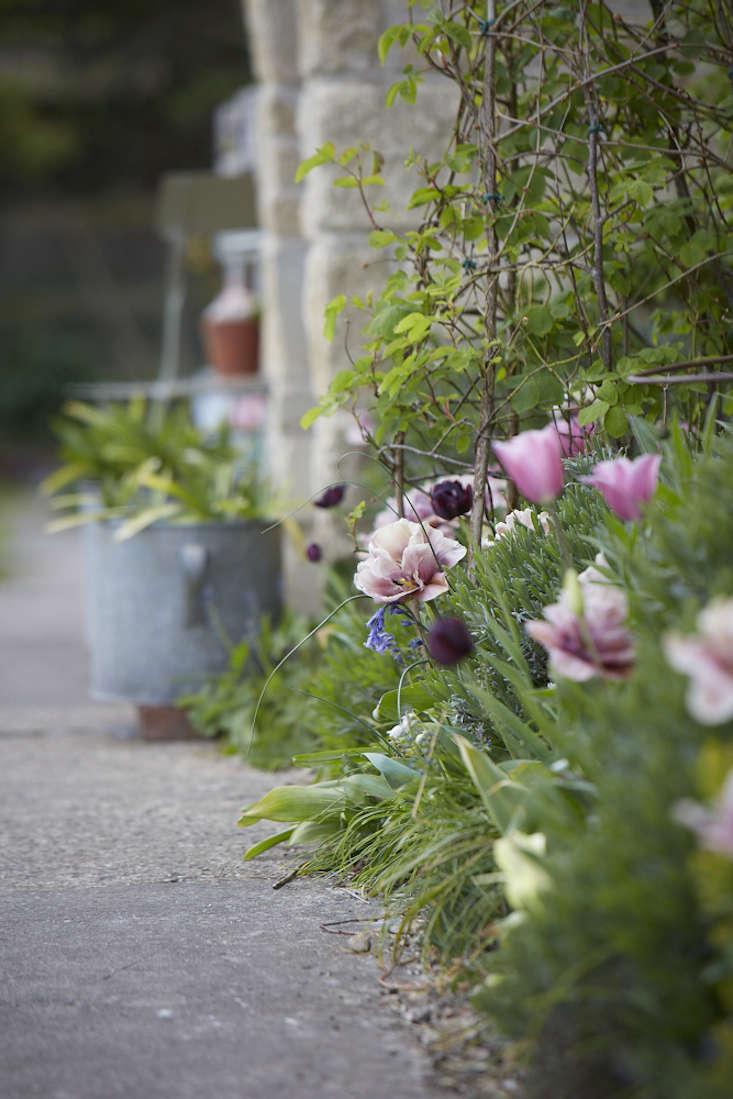 tulips-pink-against-house-2-britt-willoughby-dyer-gardenista