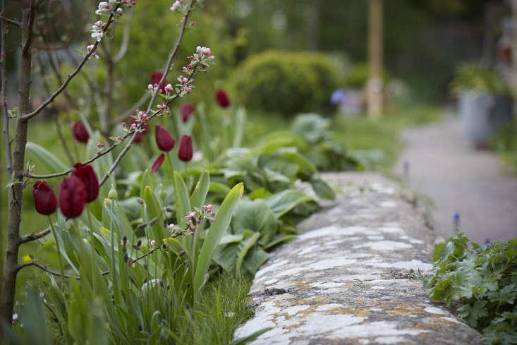 tulips-red-wall-1-britt-willoughby-dyer-gardenista