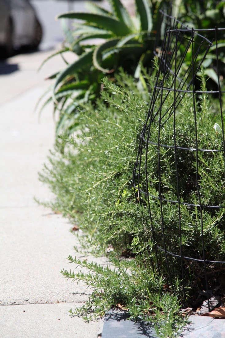 urban-rosemary-meredith-swinehart-gardenista