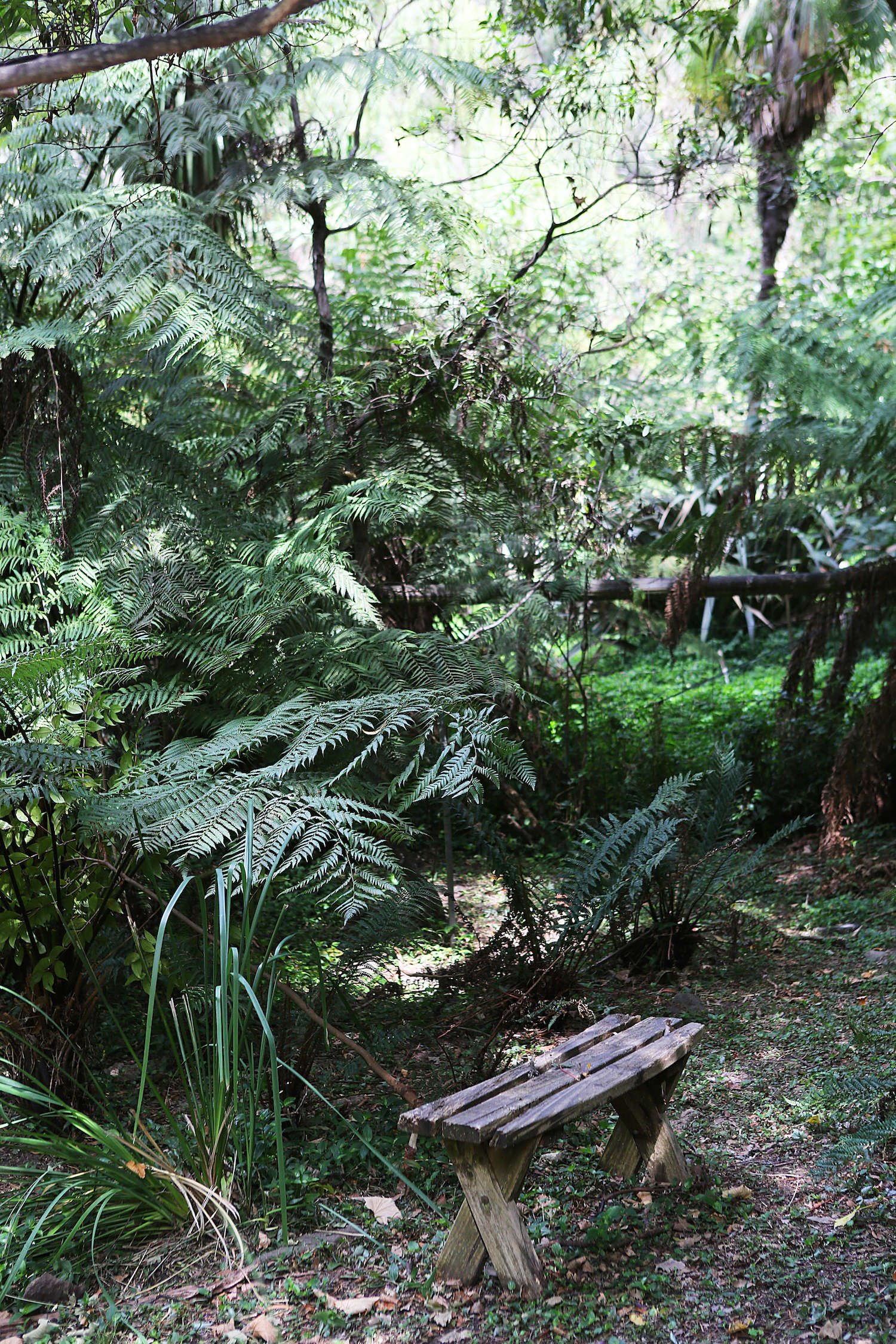 The garden remains green all year—though Melbourne is only a short way away,average summer temperatures in Belgrave reach only about 73 degrees Fahrenheit and the region gets ample rain all year.