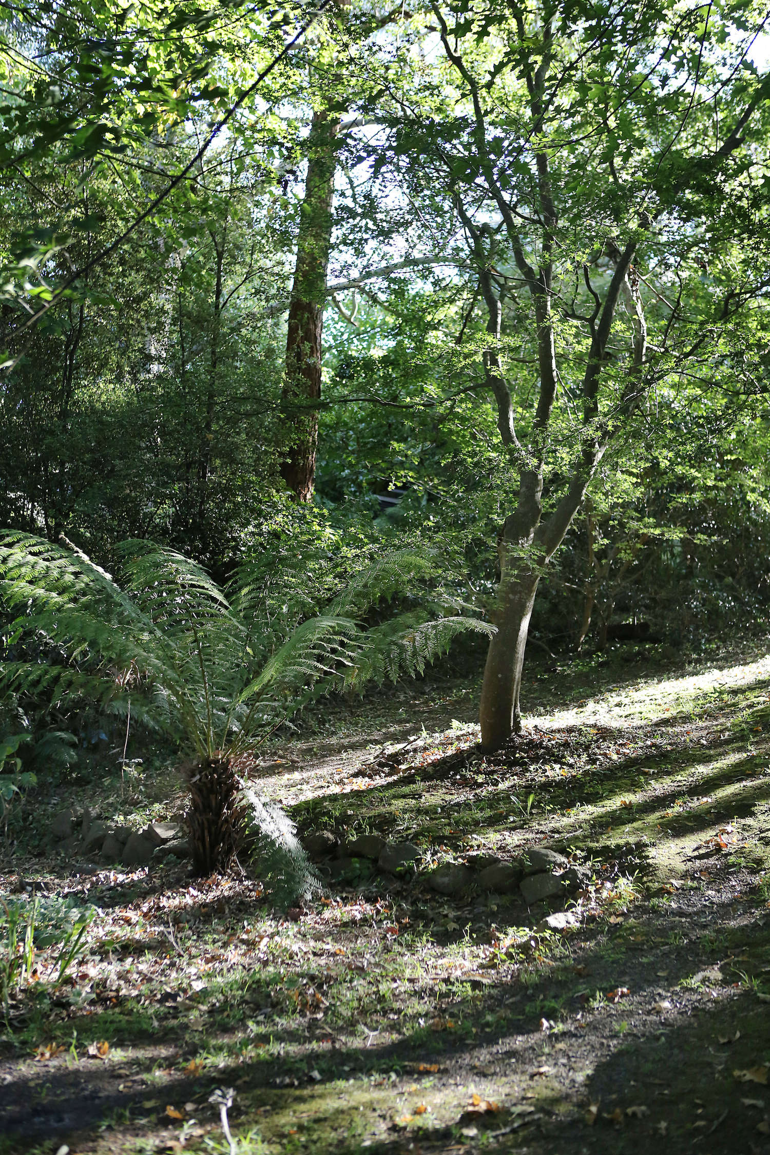 Jacky Winter Gardenssits in the Dandenong Ranges, a low mountain range wherelower altitudesare covered in temperate rainforest of mountain ash trees and dense undergrowth of ferns. Here, oak trees and a tree fern on the edge of the property.