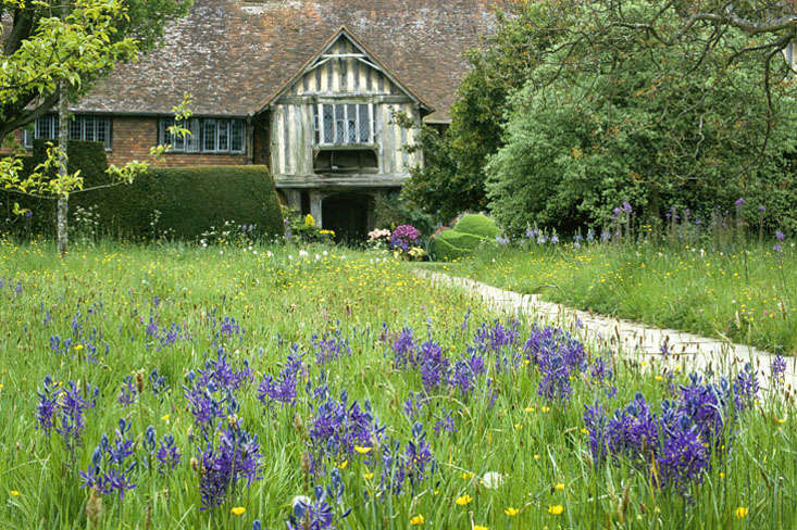 Camassia quamash in front meadow at Great Dixter with house beyond