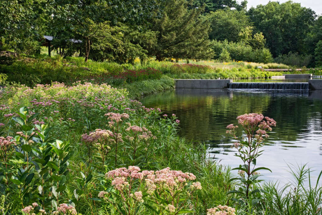 page 23 & 58,Native Plant Garden,Joe-pye weed and purple milkweed grow along the edge of the Native Plant Garden's water feature.