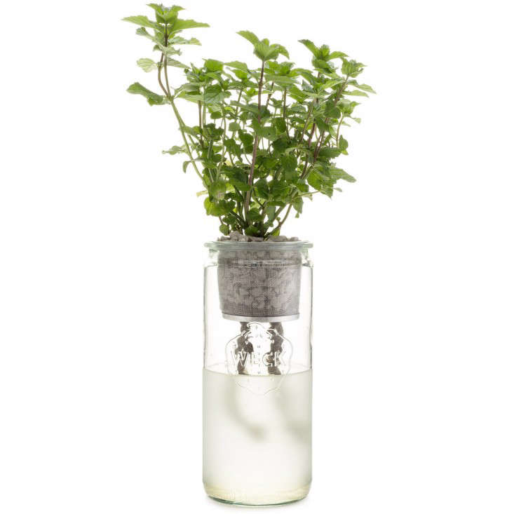frosted-bottle-hydroponic-grow-kit-gardenista