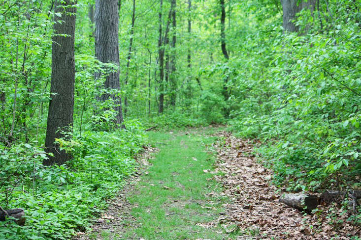 green_path_marie_viljoen_gardenista