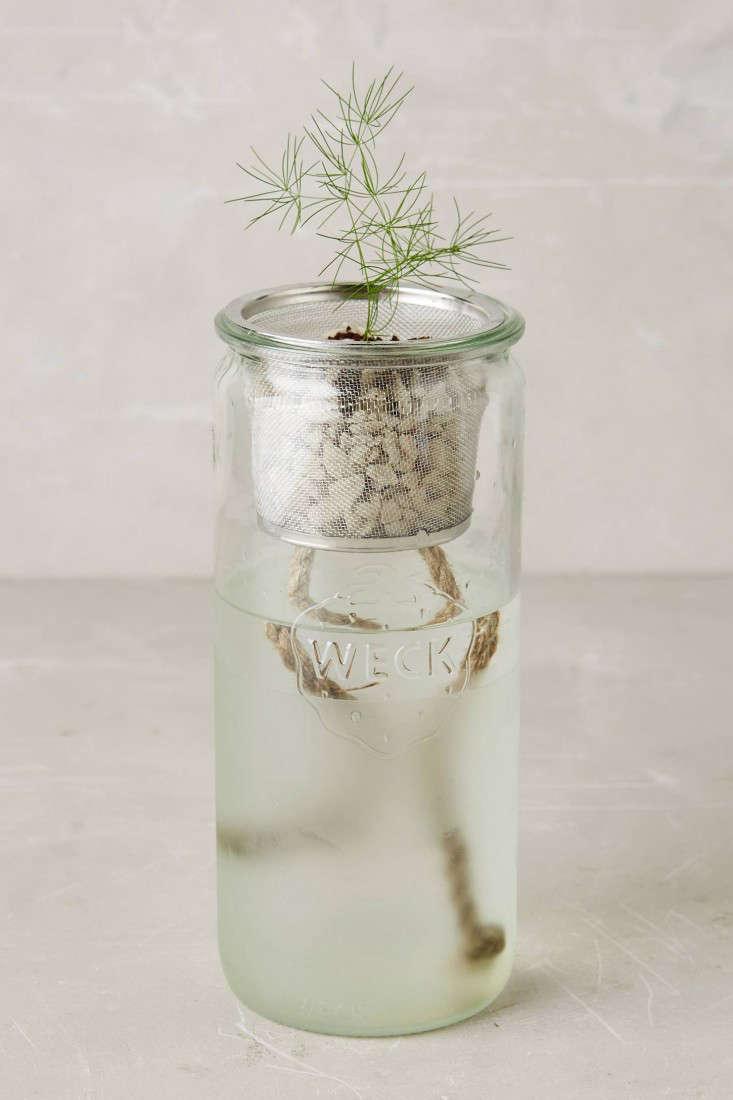 hydroponic-herb-kit-gardenista