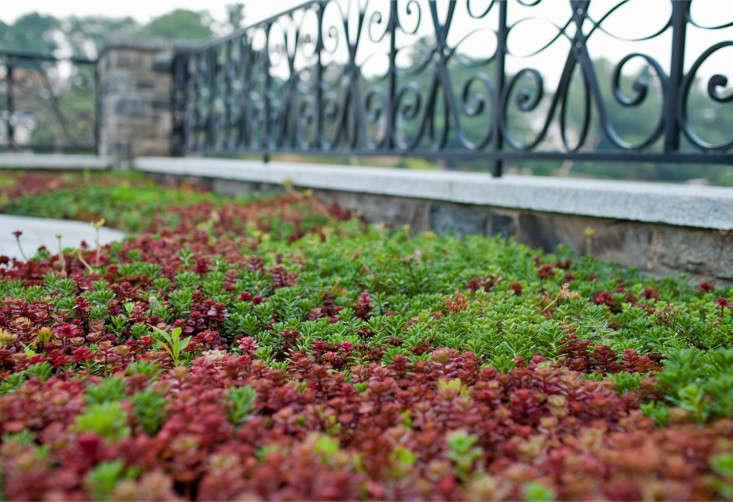 metal-fence-pattern-janice-parker-gardenista