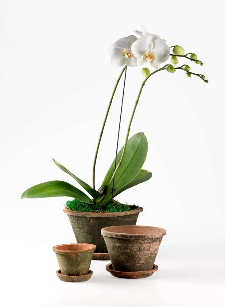 mossed-redstone-garden-pots-with-saucers_gardenista