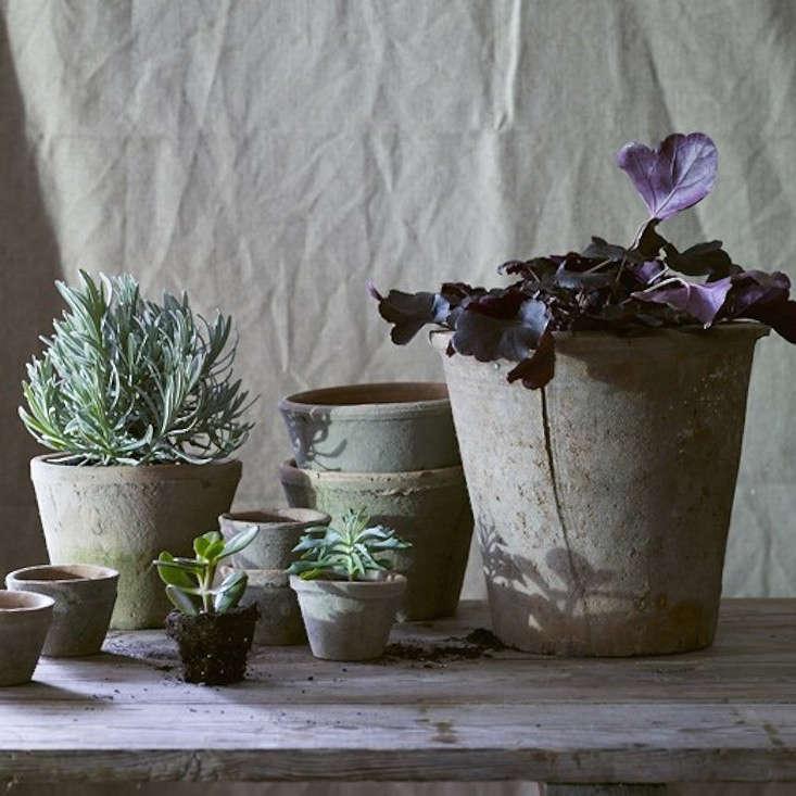 mossy-terra-cotta-pots-gardenista