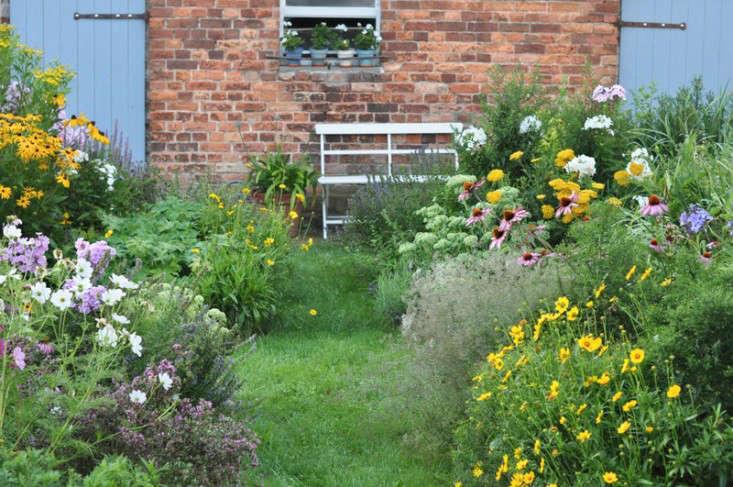 perennials_garden_echinacea_katrin_scharl_gardenista