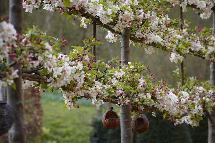 pleaching-britt-dyer-5-gardenista.