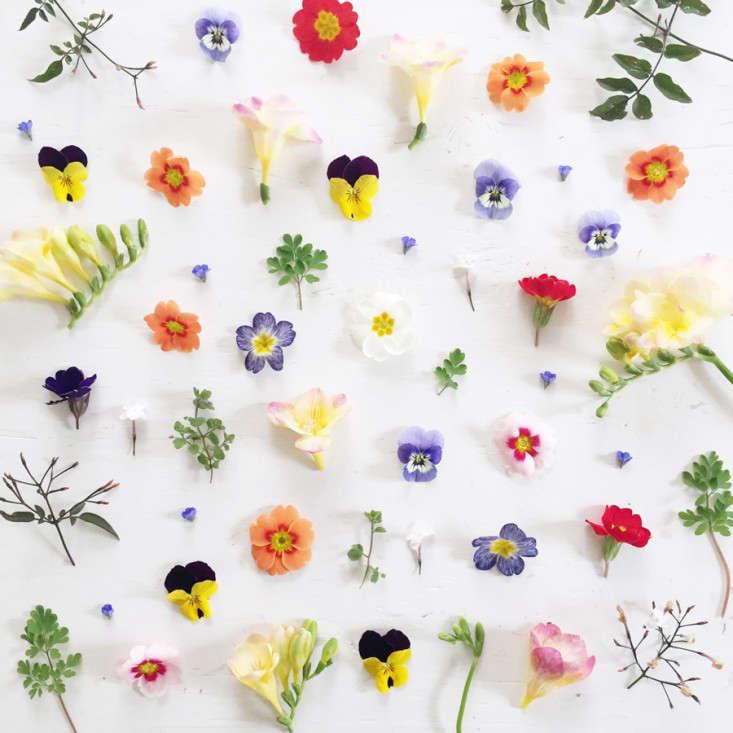 pressed-flowers-tutorial-gardenista05