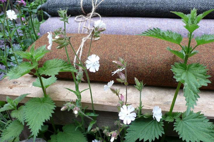 Photograph by Kendra Wilson. White campion and nettles look unstudied and natural in a Chelsea Flower Show garden. For more of this garden, see Gold Medals Awarded at the Chelsea Flower Show.