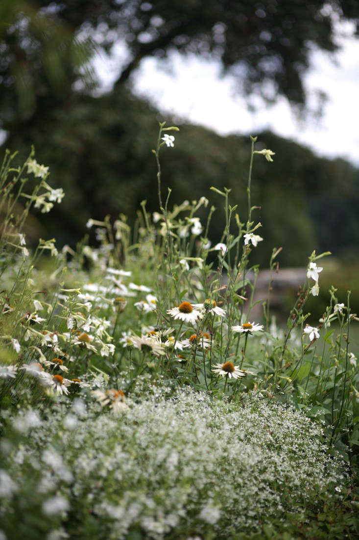 Photograph by Sara Barrett for Gardenista. Nicotiana and echinacea mix well in a border at White Flower Farm. See more of this garden in Spring Ahead: \10 Tips to Get Your Garden Ready.