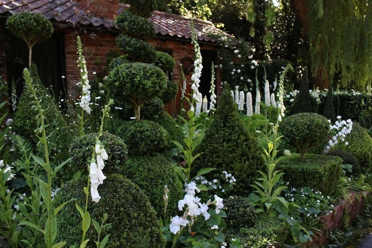 Photograph by Kendra Wilson. Irises and foxgloves are planted against a velvety green backdrop of boxwood topiaries at the Chelsea Flower Show. To get a similar look, says Kendra, &#8