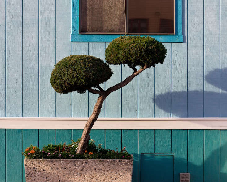 Marc_Atlock_California_topiaries_gardenista_obsessions