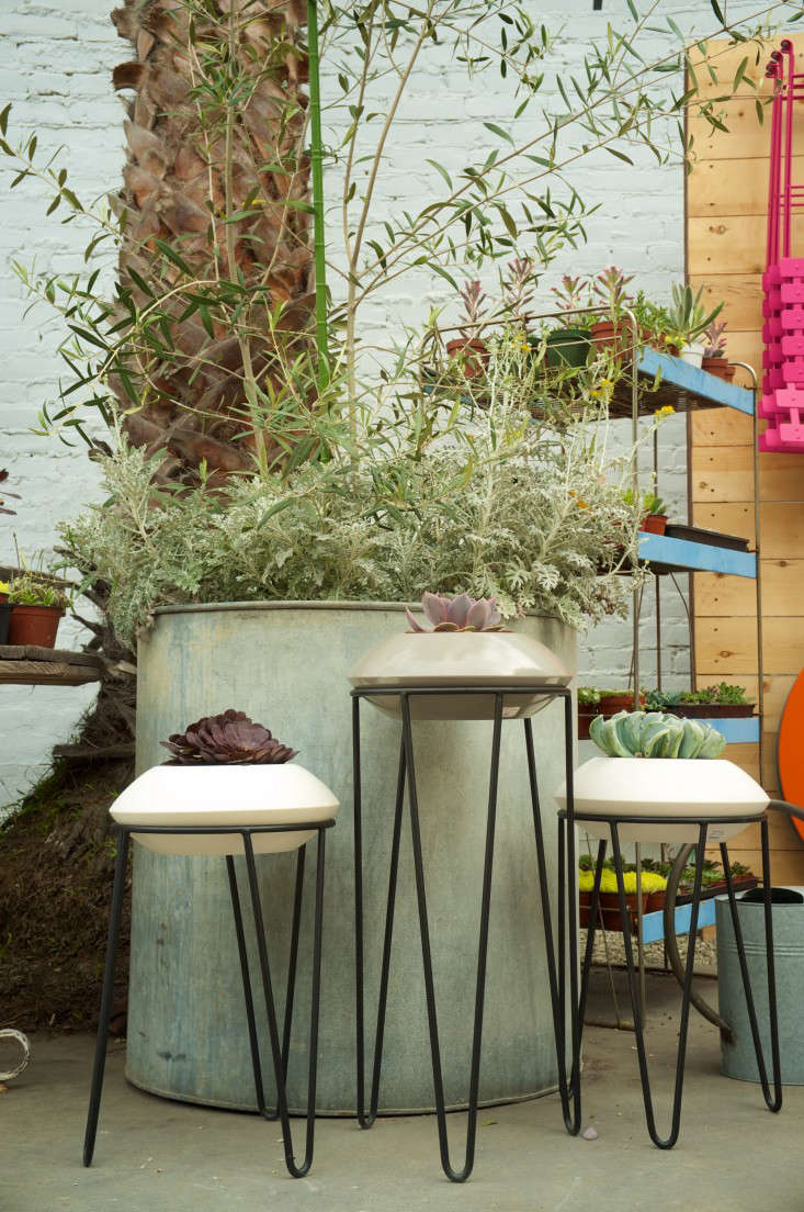 Potted-Lazybones8_santa_monica_shop-Gardenista
