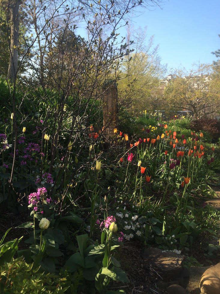 Tim Callis-garden-gardenista-current-obsessions