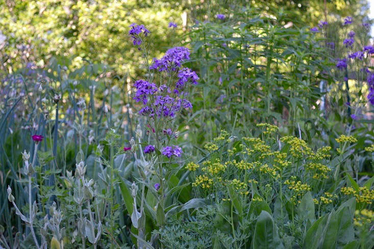 Valeria Frankoski garden_Stacey Lindsay_gardenista
