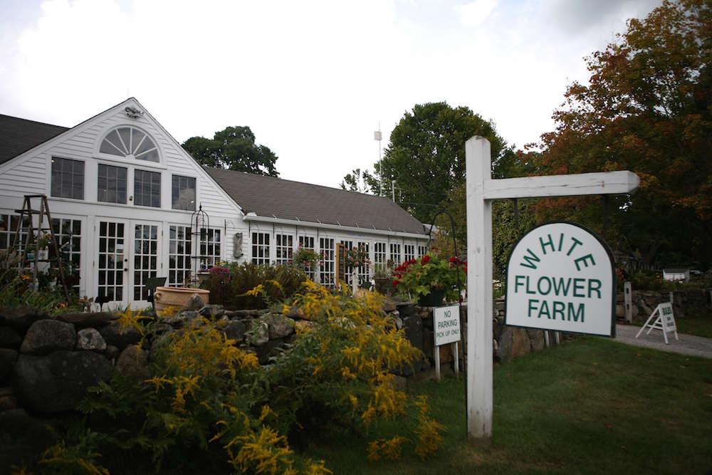 White Flower Farm | Gardenista