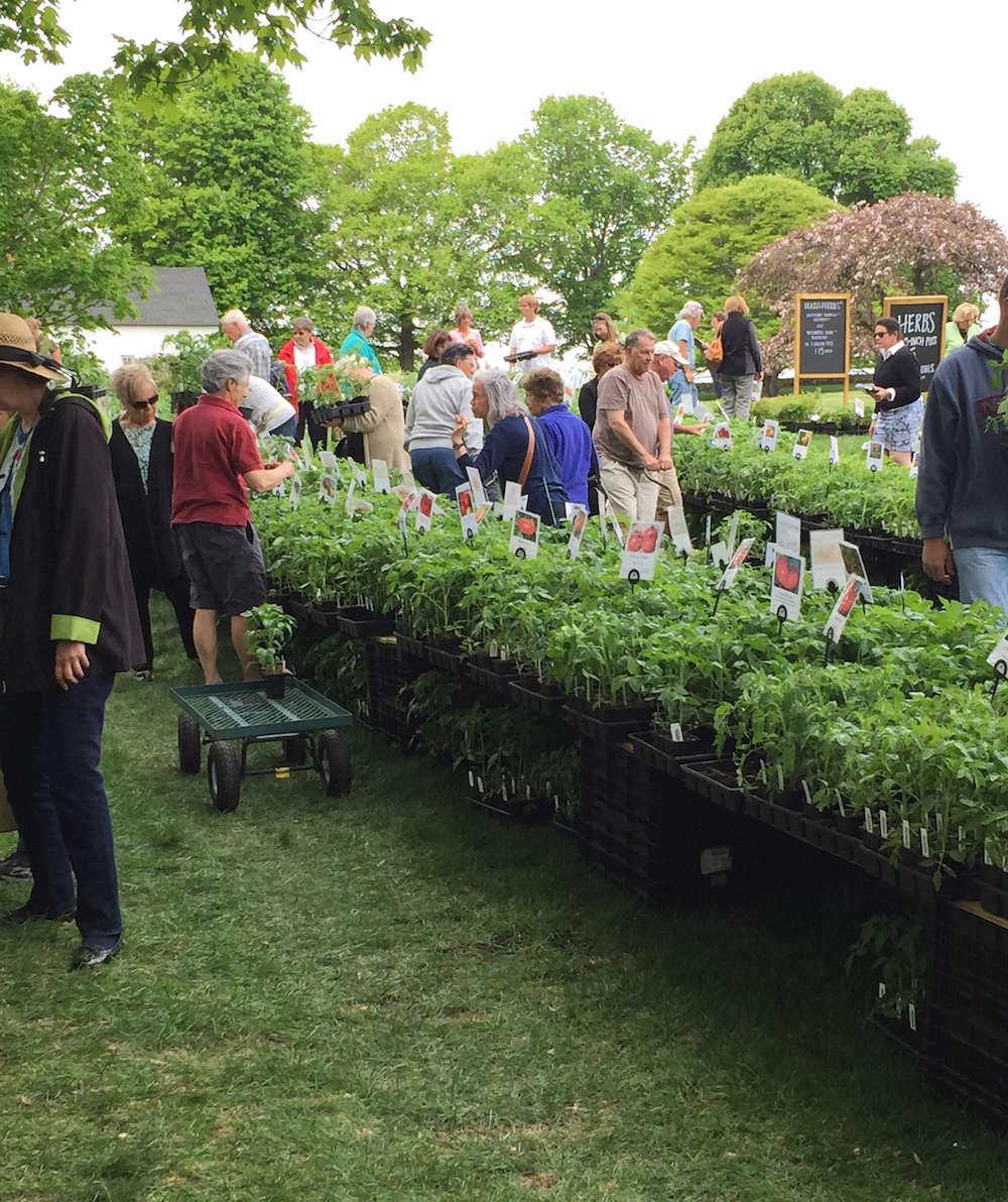 White Flower Farm's Great Tomato Celebration | Gardenista