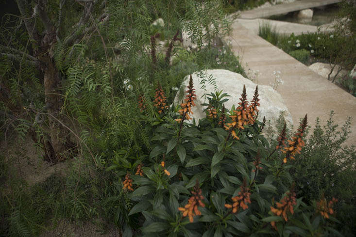 andy-sturgeon-chelsea-2-photo-jim-powell-gardenista
