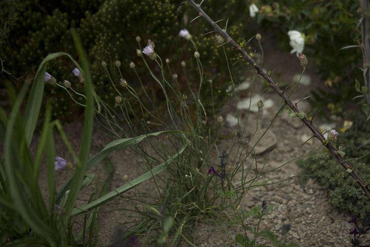 andy-sturgeon-chelsea-4-photo-jim-powell-gardenista