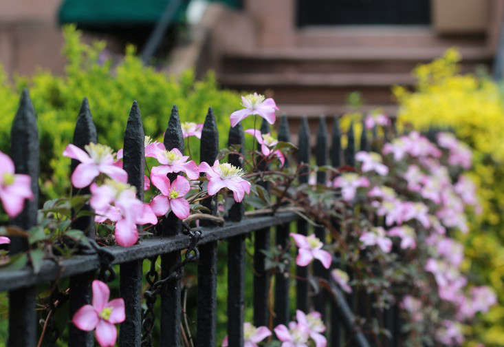 carroll_gardens_fence_marieviljoen_gardenista