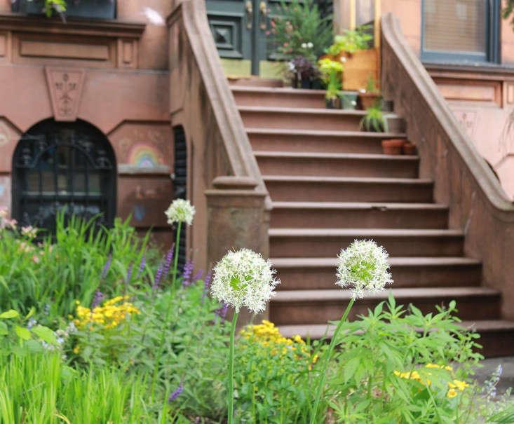 everest_alliums_marieviljoen_Brooklyn_Gardenista