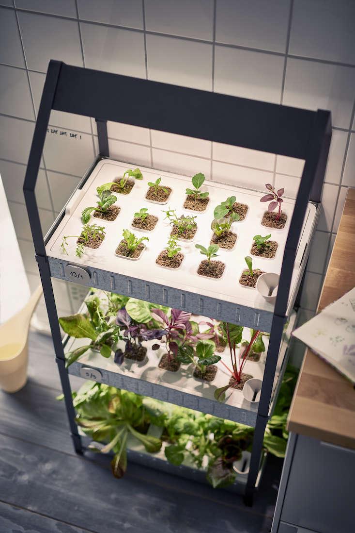 ikea_krydda_vaxer_hydroponics_gardening_kit_gardenista_11352