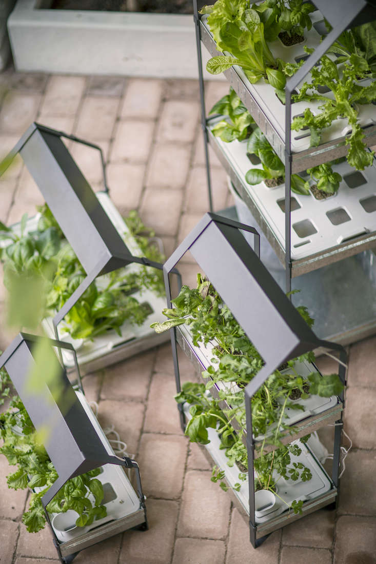 ikea_krydda_vaxer_hydroponics_gardening_kit_gardenista_11363