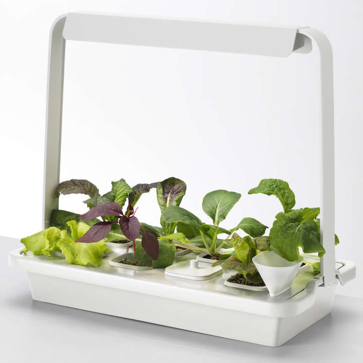 ikea_krydda_vaxer_hydroponics_gardening_kit_gardenista_11423