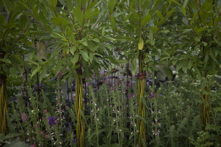 jekka-mcvicar-chelsea-9-photo-Jim-Powell-gardenista