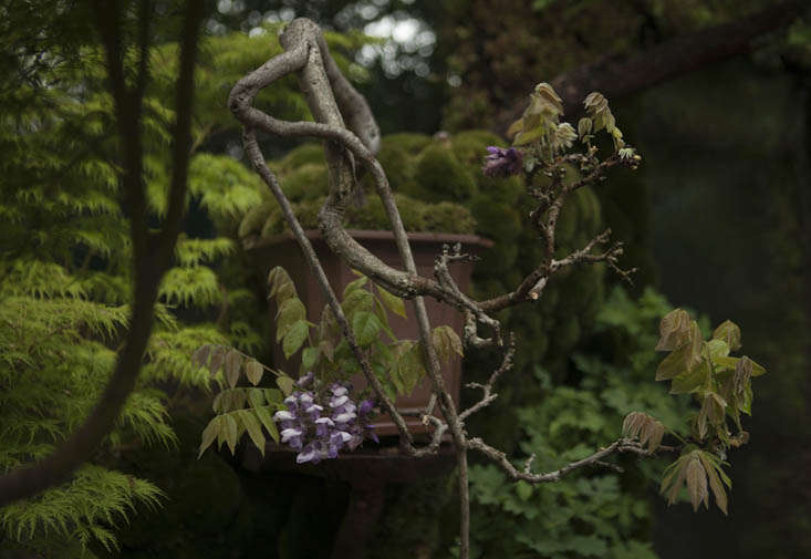 kazuyuki-ishihara-chelsea-7-photo-jim-powell-gardenista