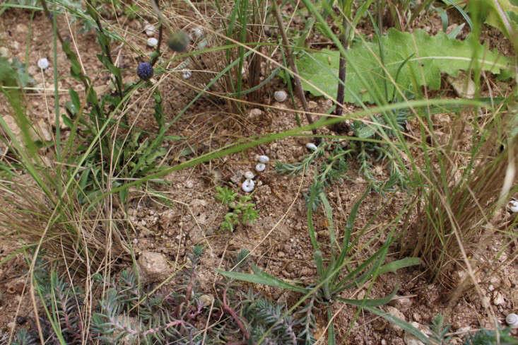 occitane-garden-chelsea-gardenista