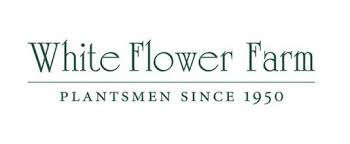 white-flower-farm-logo