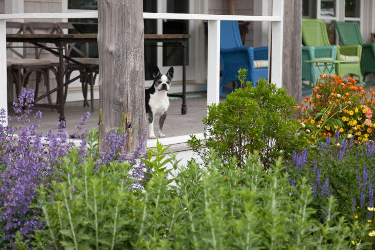 10-Matthew-Cunningham-Landscape-Design-Clamshell-Alley-porch-dog-perennials-gardenista