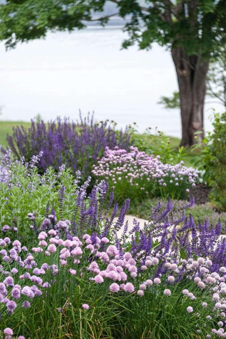 13-Matthew-Cunningham-Landscape-Design-Clamshell-Alley-maine-purple-perennials-plant-palette-gardenista