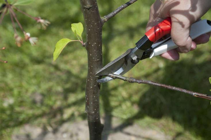 5_ Removing_crabapple_branches_Gardenista