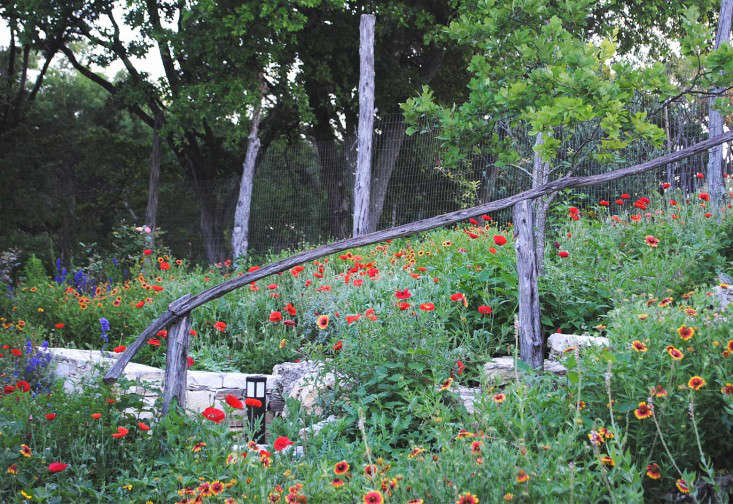 BEE-CAVE-Tait-Moring-garden-Gardenista-1