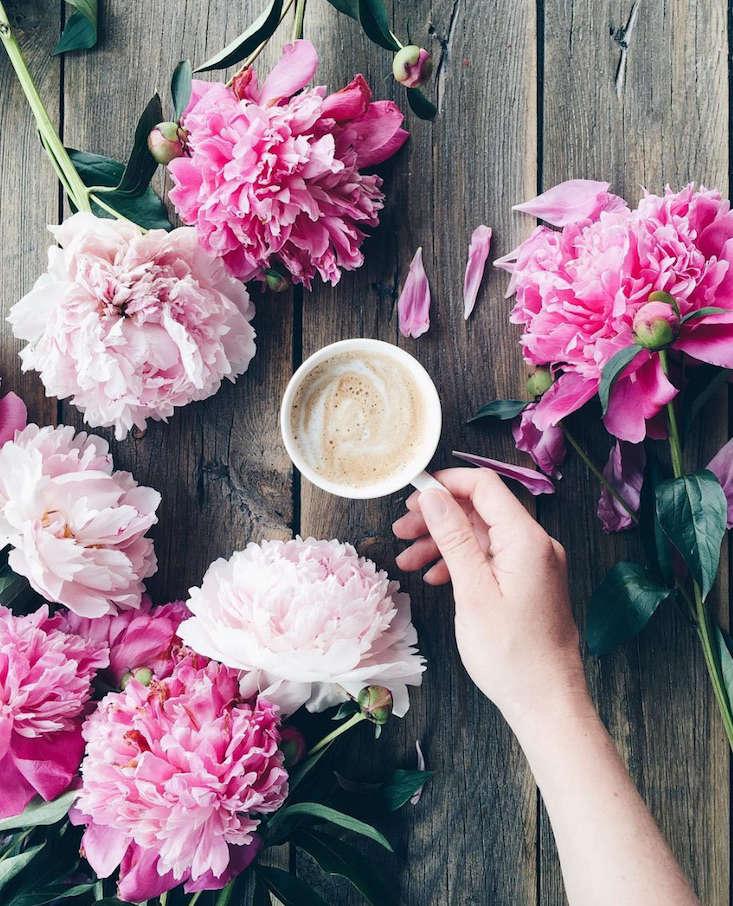 Dominika Brudny_instagram_gardenista_current_obsessions