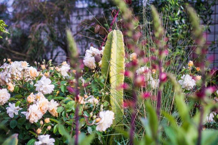 Garden-Apothecary-Half-Moon-Bay-California-Container-Garden-Driveway-Gardenista-16-2-14