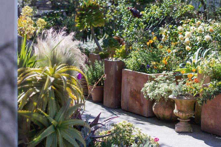 Garden-Apothecary-Half-Moon-Bay-California-Container-Garden-Driveway-Gardenista-2016-3