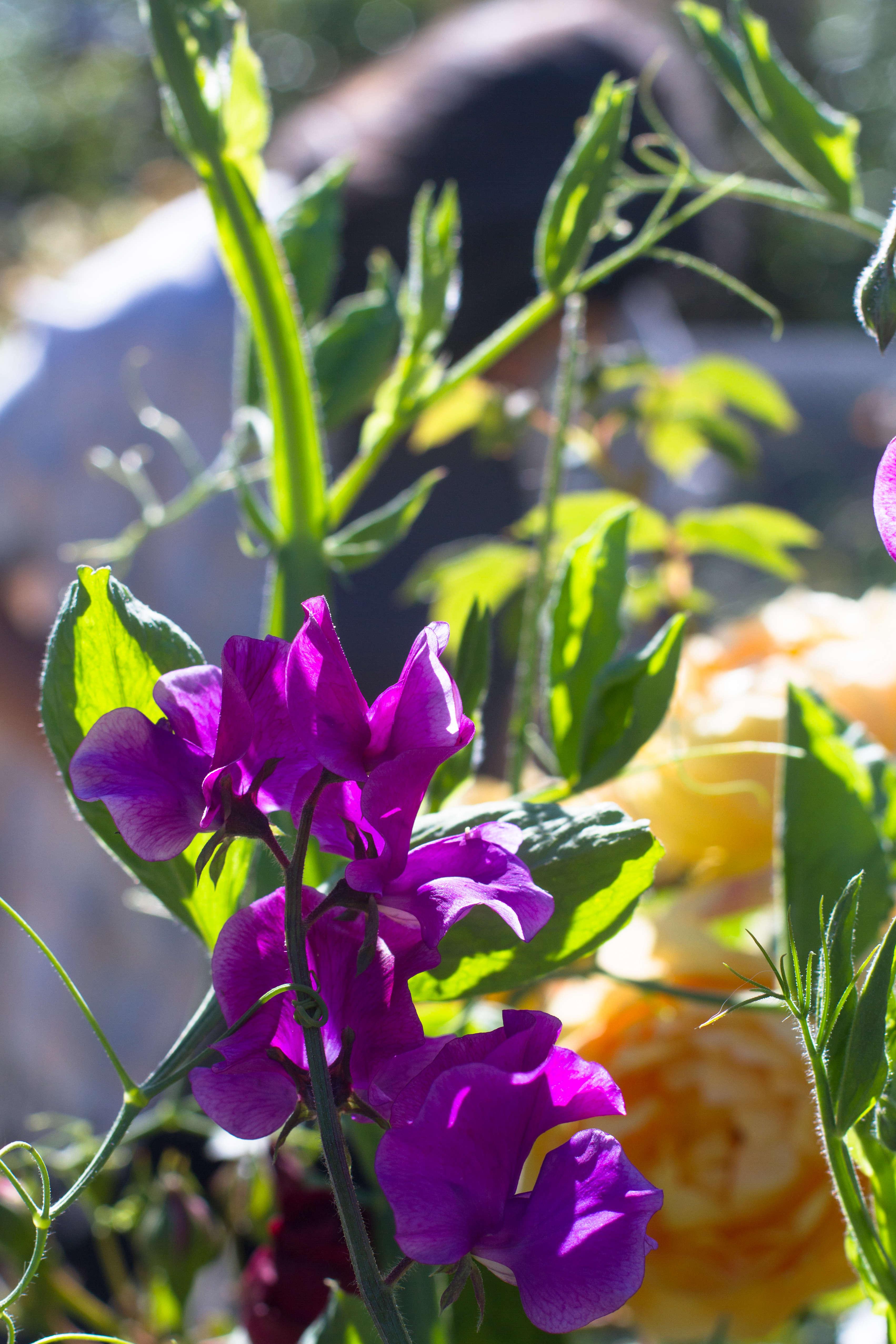 Garden-Apothecary-Half-Moon-Bay-California-Container-Garden-Driveway-Gardenista-2016-31
