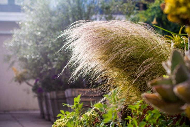 Garden-Apothecary-Half-Moon-Bay-California-Container-Garden-Driveway-Gardenista-APR2016-2-20