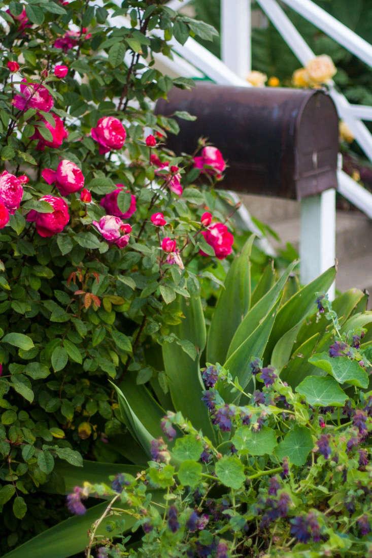 Garden-Apothecary-Half-Moon-Bay-California-Container-Garden-Driveway-Gardenista-APR2016-2-34