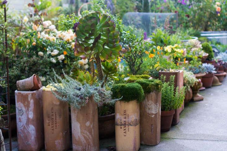 Garden-Apothecary-Half-Moon-Bay-California-Container-Garden-Driveway-Gardenista-APR2016-2-44